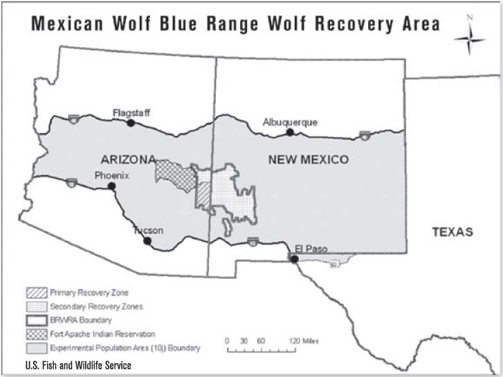 mexican gray wolf recovery zone